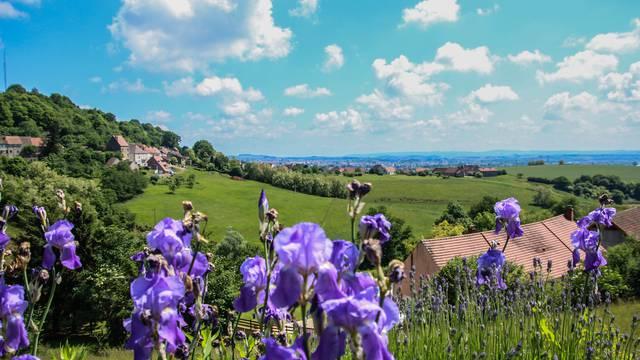 Paysage de Montcenis. © Lesley Williamson.