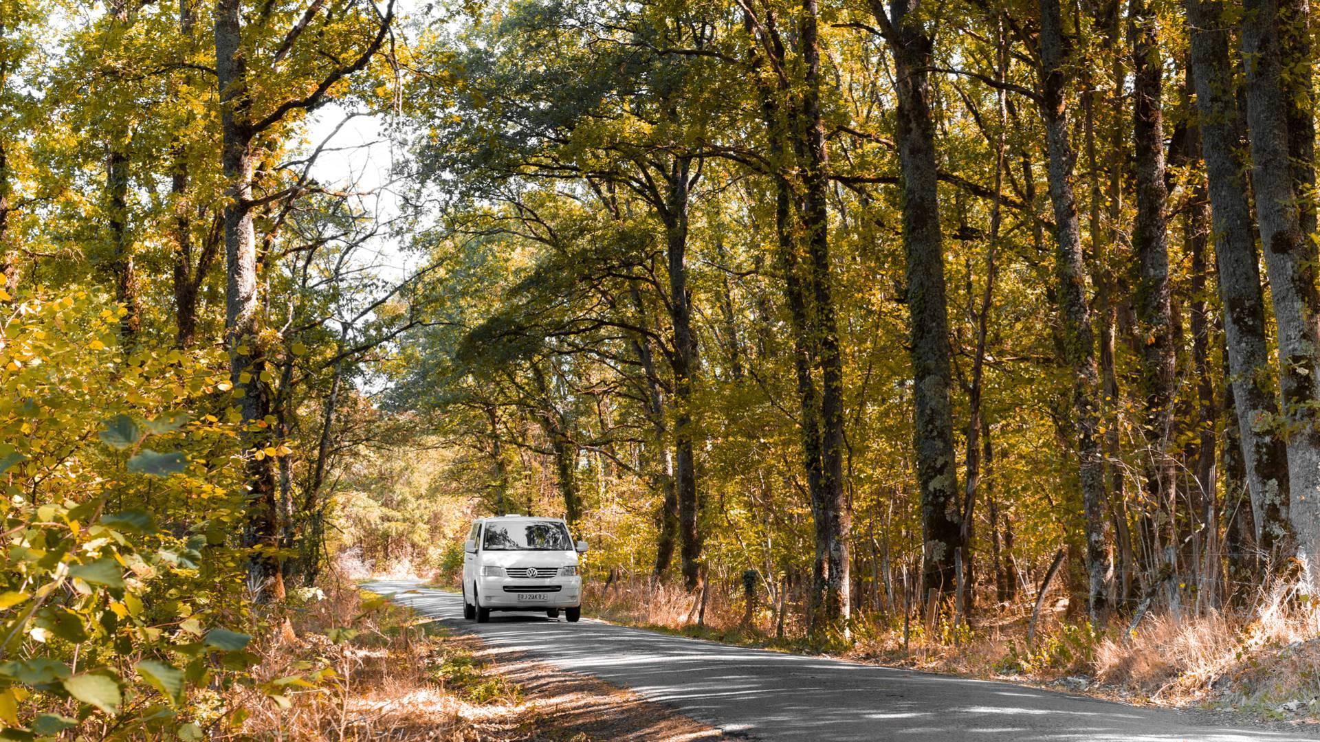 Route de sous-bois à l'automne. © Lesley Williamson.