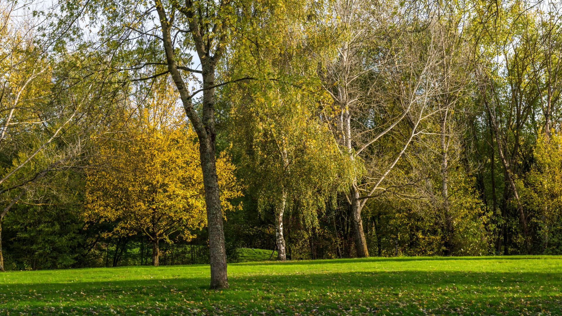 Couleurs d'automne dans le parc Maugrand, Montceau-les-Mines. © Oscara Photographe_Creusot Montceau Tourisme.