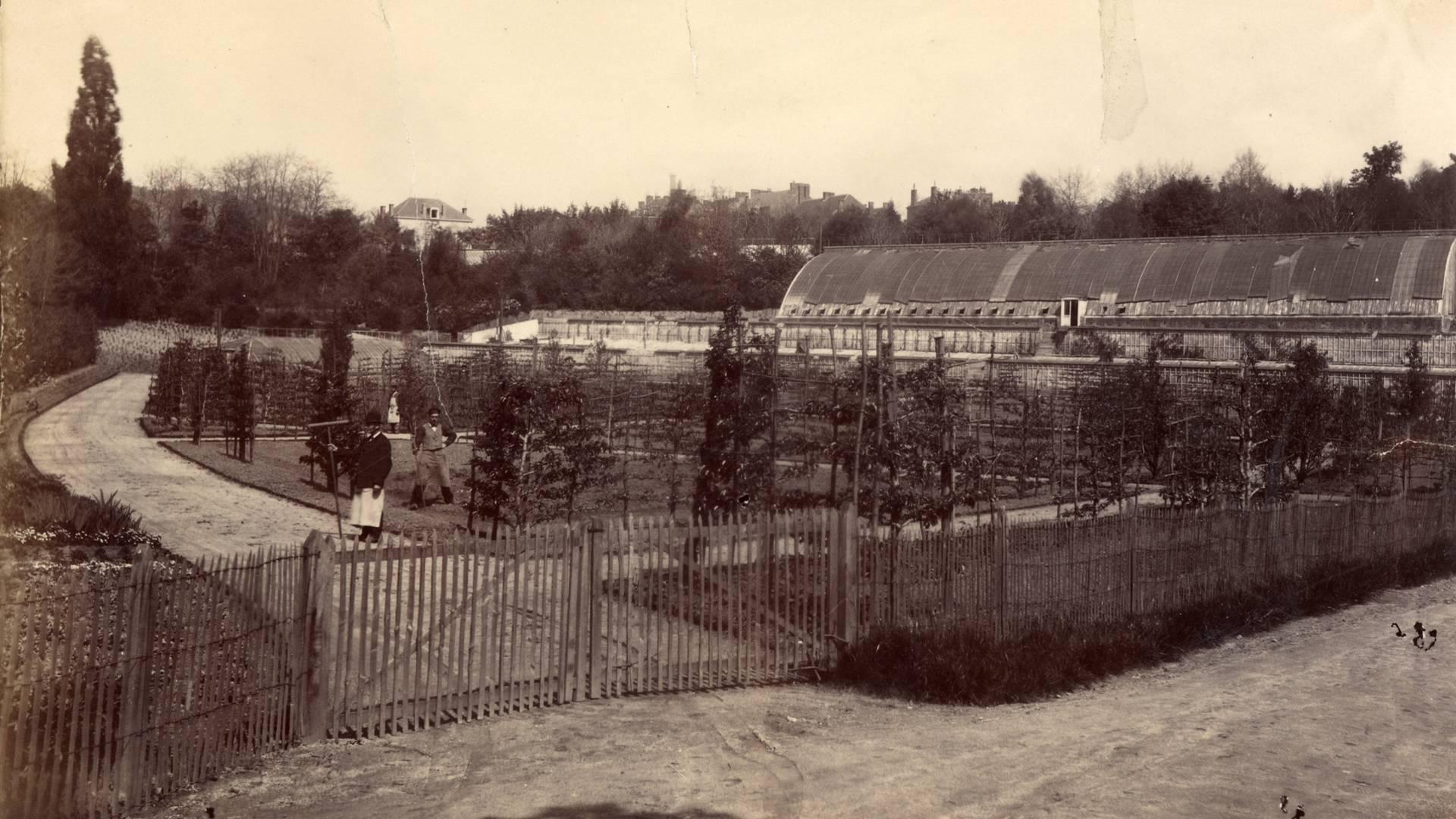 Les anciennes serres du parc de la Verrerie, en 1881. © CUCM, document Écomusée, reproduction D. Busseuil.
