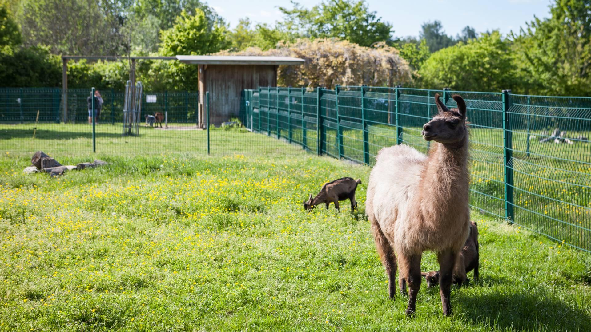 Les animaux de la ferme du parc Maugrand, Montceau-les-Mines. © Xavier Spertini.