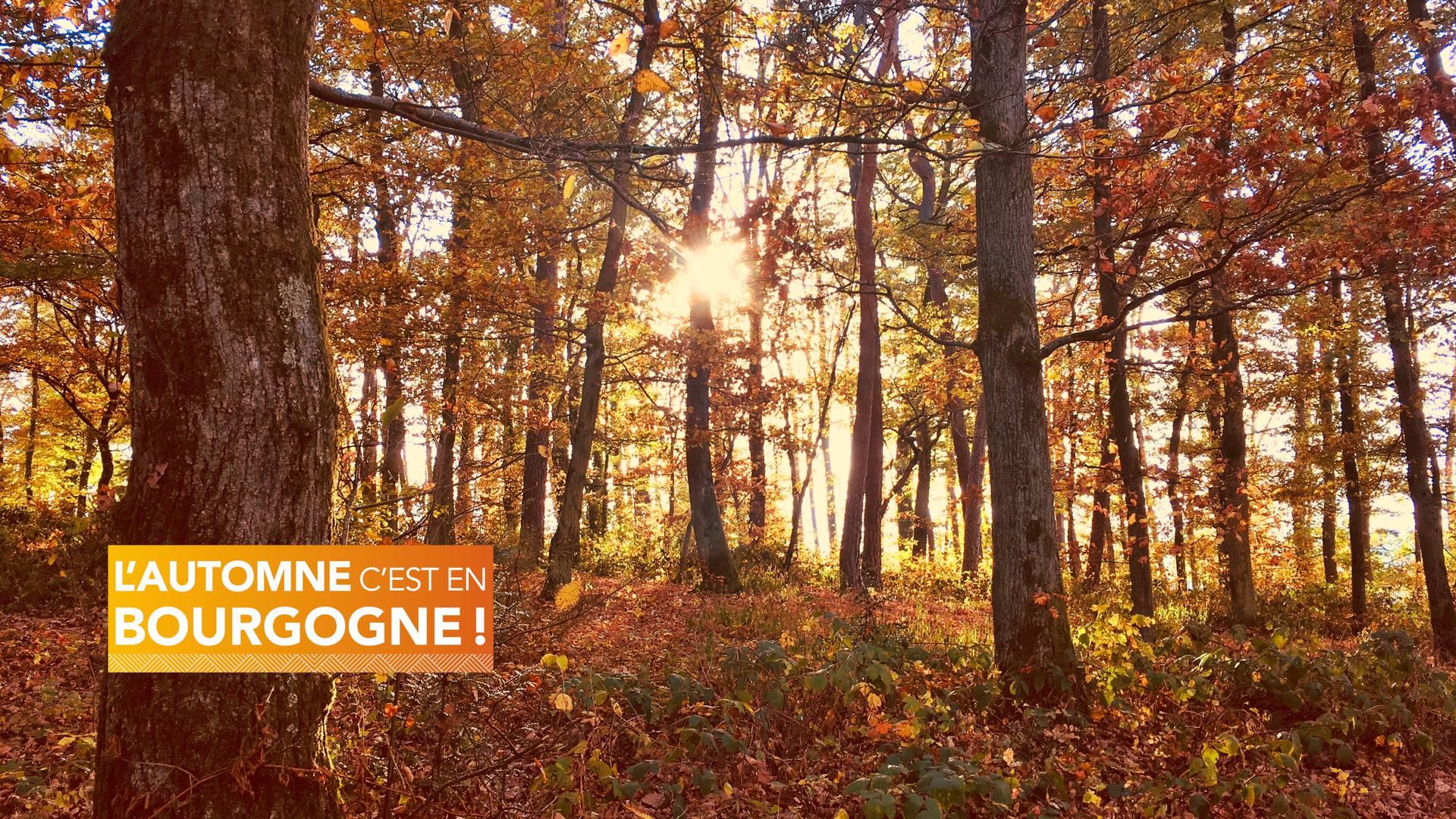 Forêt d'automne en Bourgogne. © Creusot Montceau Tourisme.